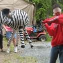 The Zebra - Leo Black