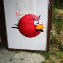 Angry Bird - Erin Imes