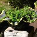 Flower Pot 6 - Stacie Lanners