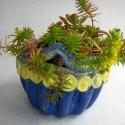 Flower Pot - Talia Petosa