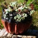 Flower Pot 5 - Stacie Lanners