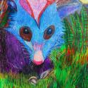 Possum - Ben Sherlock - Oil Pastel