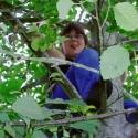 Shura tree climber